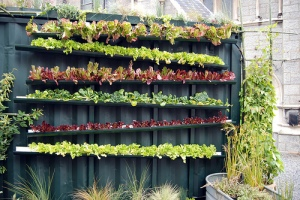 Gutter gardening, anyone??